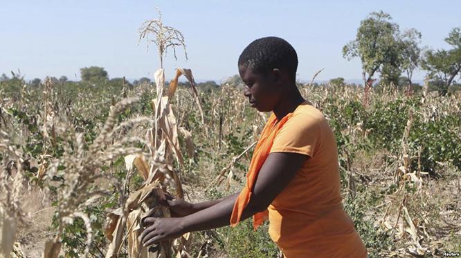 mulher-feminismo-mudancas-climaticas-africa